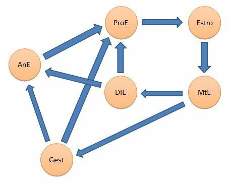 esquema-ciclo-estral-hembras-domesticas