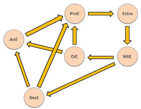 ciclo-estral-hembras-domesticas