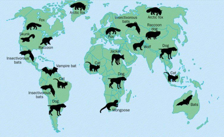 mapa-reservorios-rabia-mundial-perro