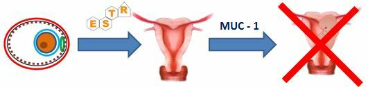 mucina-estrogenos-reconocimiento-gestacion