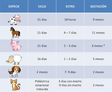 duración-ciclo-estral-animales