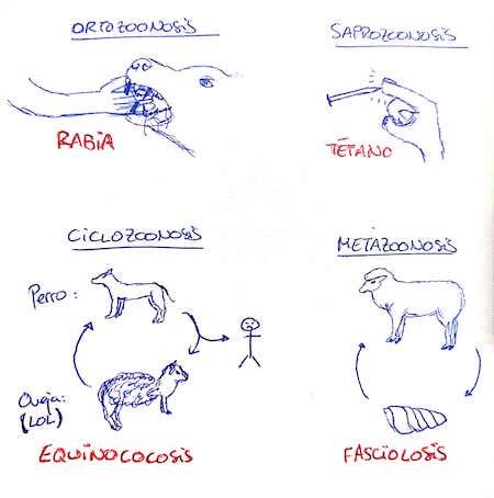 tipos-de-zoonosis-clasificacion